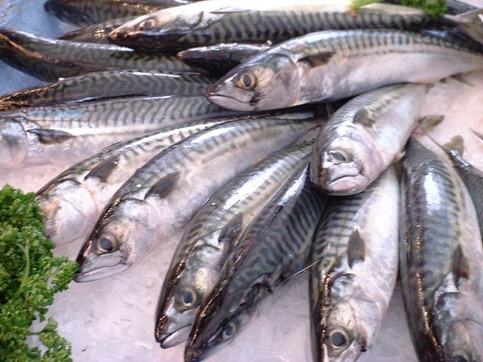 pesce alimentazione runner